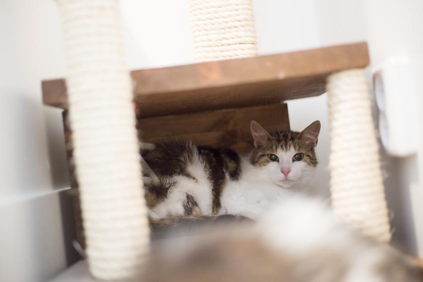 Missy, PESUn kotia etsivä kissa