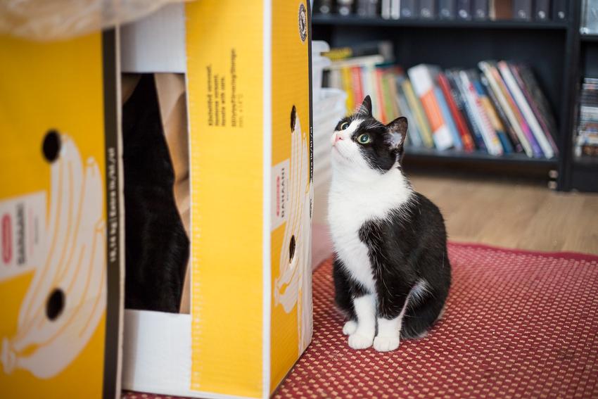 Laatikoita ja kissoja
