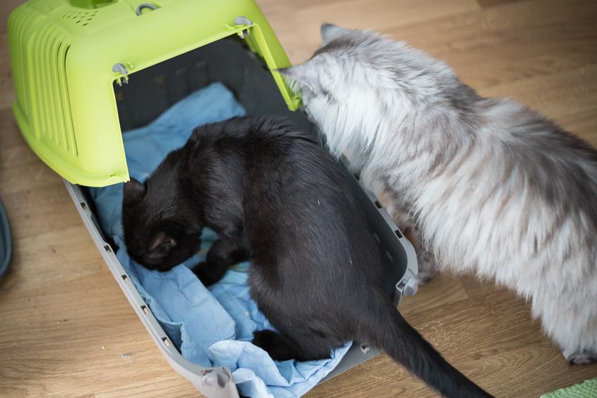 Kuljetuskoppa ja kissat