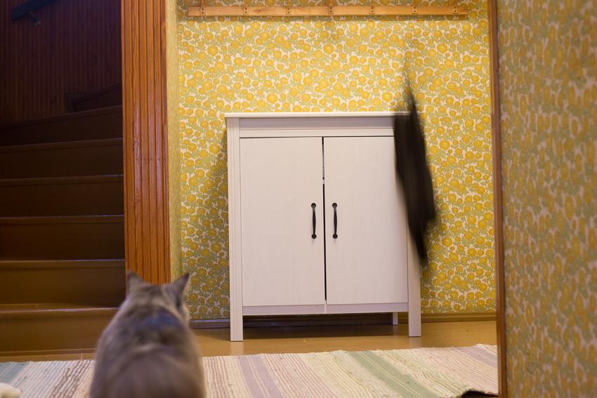 Kissakalenterikuvaus