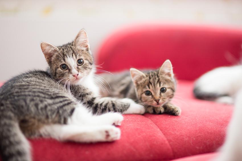 5 asiaa harkittaviksi ennen kissan hankintaa