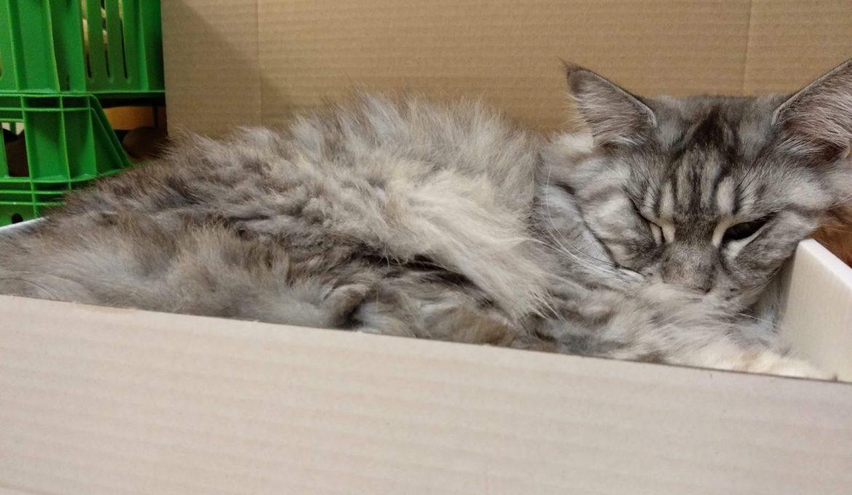 Laatikkokissa laatikossa