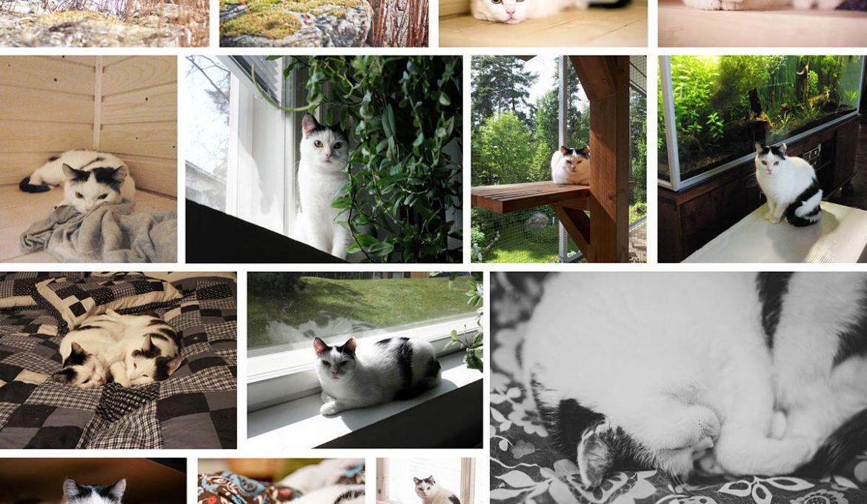 7 vuotta tilapäiskodissa — Murun tarina