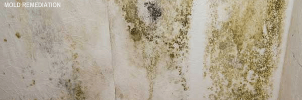 Mold removal Remediation professional restoration services