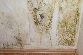 mold removal professional restoration services