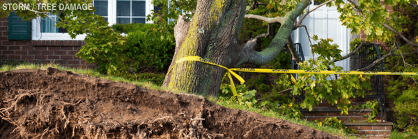 Storm Tree Damage professional restoration services