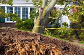 tree-damage-raleigh-nc