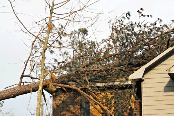 tree damage professional restoration services