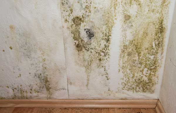 mold remediation cary nc