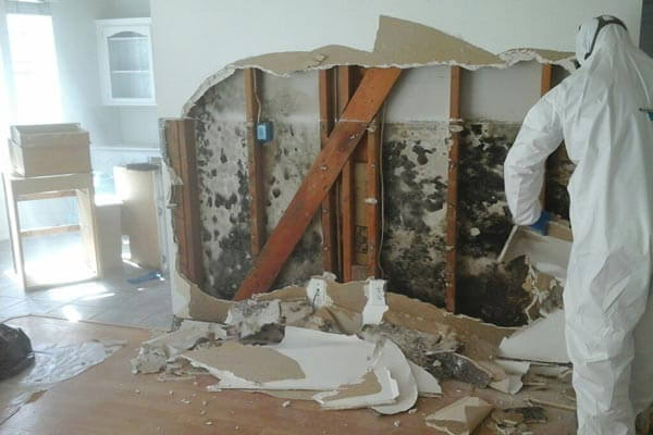 mold-damage-repair raleigh nc