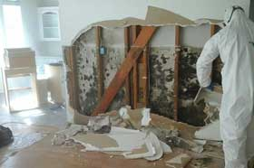 mold-removal-raleigh-nc