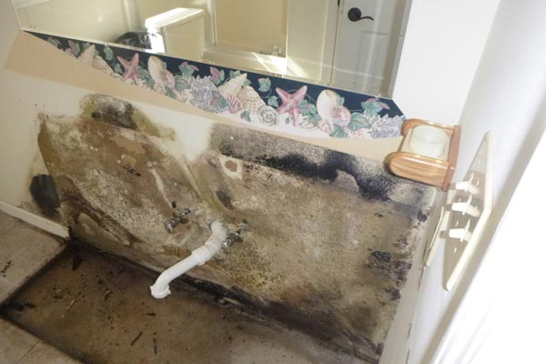 mold removal services holly springs nc