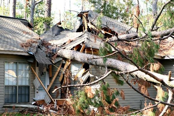 tree damage holly springs nc