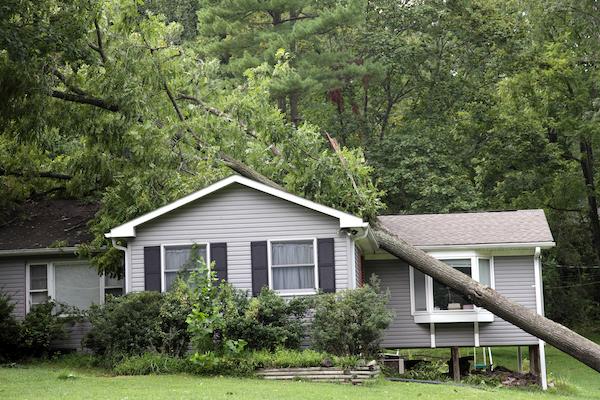 tree removal morrisville nc, tree damage morrisville nc, tree removal company, morrisville nc tree removal services, morrisville nc restoration services, morrisville nc restoration company