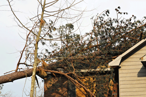 tree removal cary nc, tree damage cary nc, tree removal company, cary nc tree removal services, cary nc restoration services, cary nc restoration company