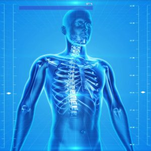 The human body quiz - What do you actually know about human body ? 26