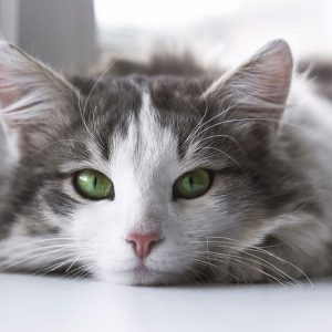 Cats quiz- How much do you actually know about cats ? 25