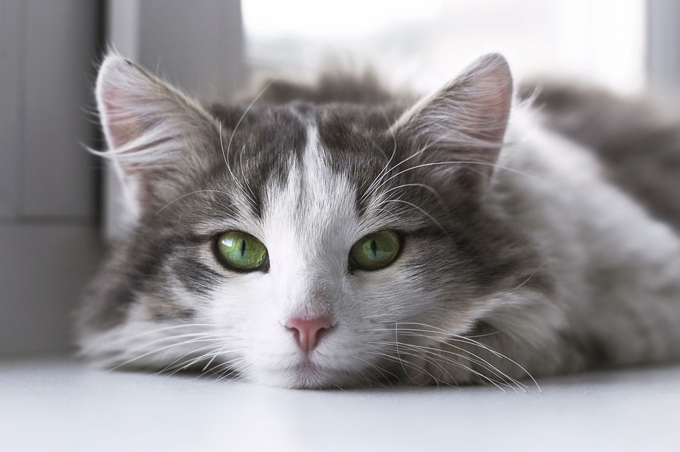 Cats quiz- How much do you actually know about cats ? 5