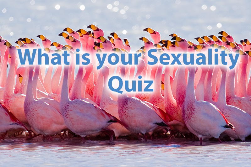A Quiz For Girls - What Is Your Sexuality? 1
