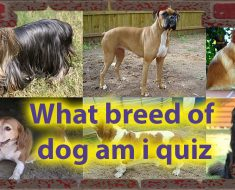 What breed of dog am i quiz - Dog Personalities Quiz 37