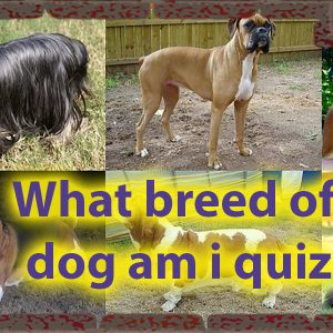 What breed of dog am i quiz - Dog Personalities Quiz 56
