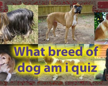 What breed of dog am i quiz - Dog Personalities Quiz 8