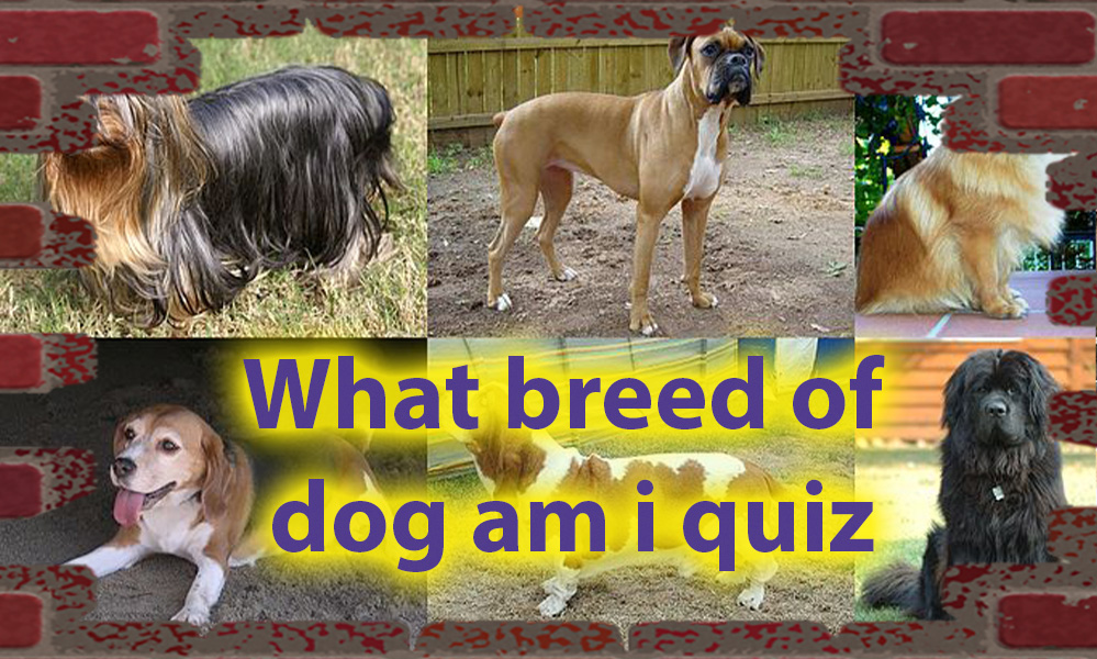 What breed of dog am i quiz - Dog Personalities Quiz 1