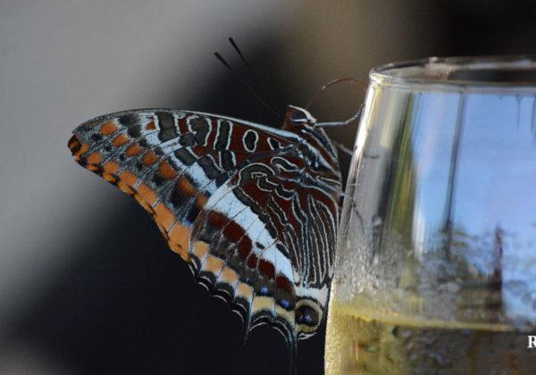 Weinproben wieder erlaubt – Wir freuen uns!