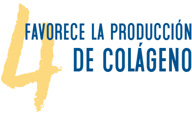 4. Favorece la producción de colágeno