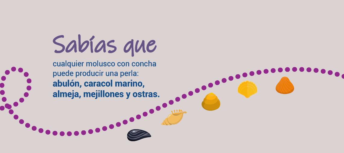 cualquier molusco con concha puede producir una perla: abulón, caracol marino, almeja, mejillones y ostras.
