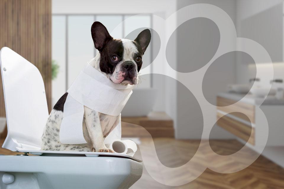 Perro envuelto en papel higiénico sentado sobre inodoro