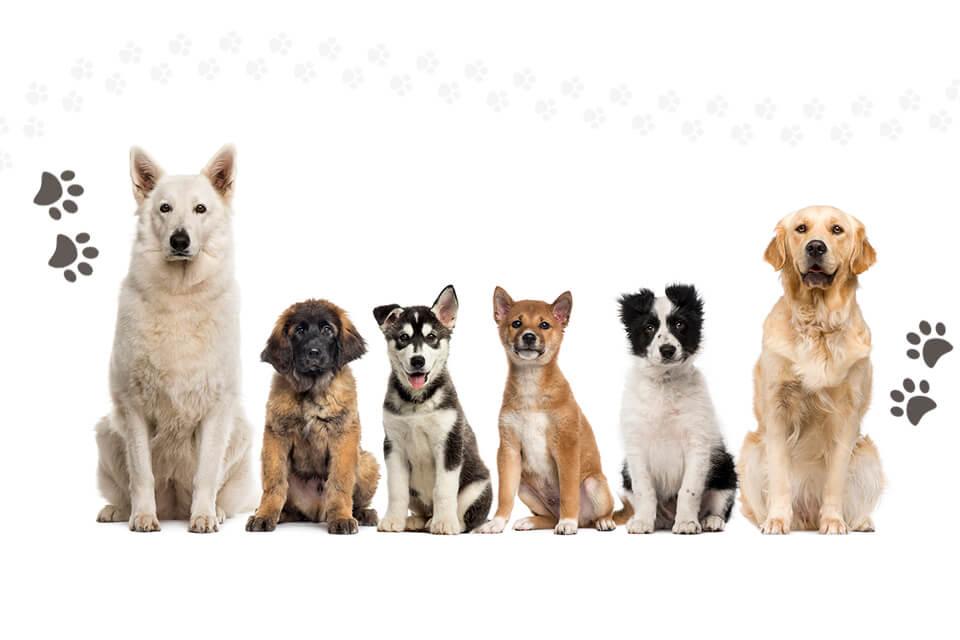 Varios perros de razas diferentes