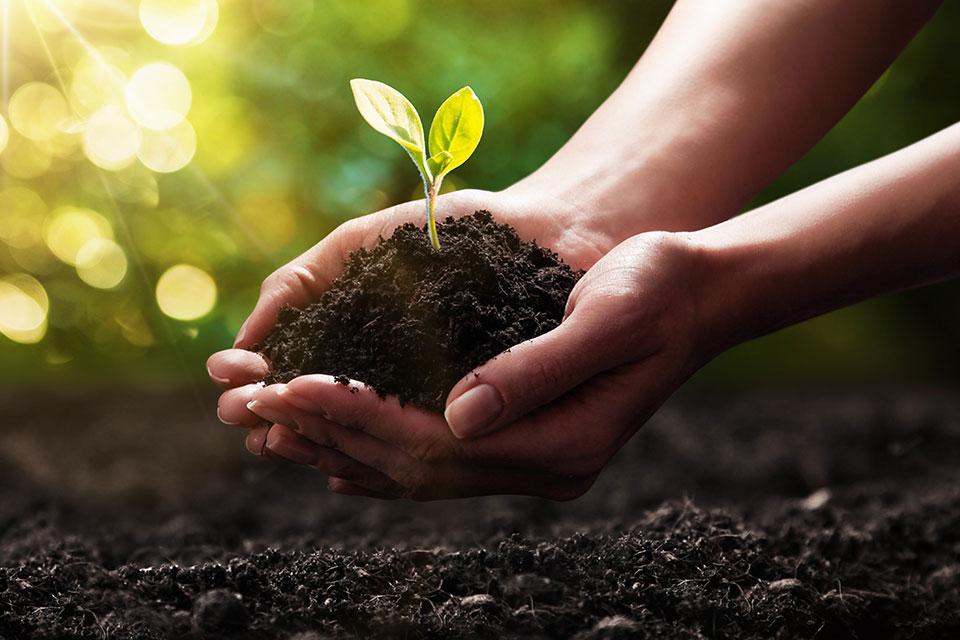 Manos plantando una pequeña planta en la tierra