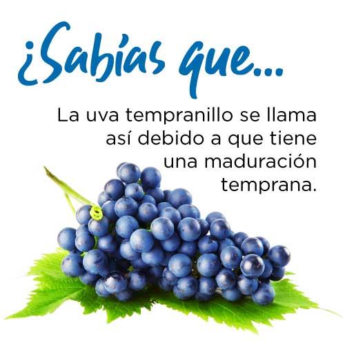 ¿Sabías que… La uva tempranillo se llama así debido a que tiene una maduración temprana.