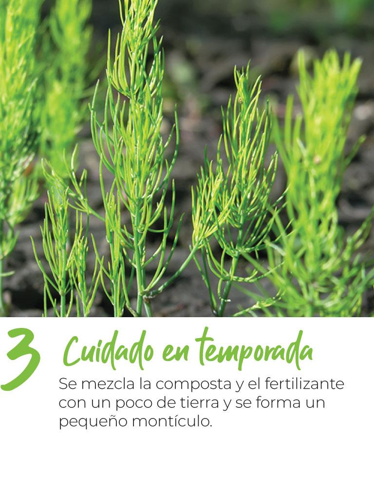 Cuidado en temporada Se mezcla la composta y el fertilizante con un poco de tierra y se forma un pequeño montículo.