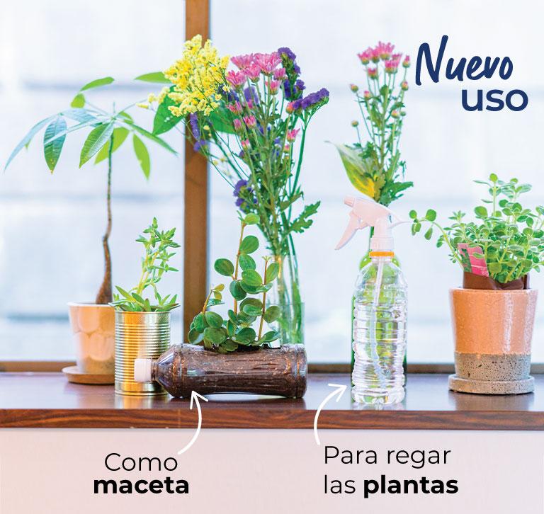 Nuevo uso, botella de plástico como maceta o para regar las plantas