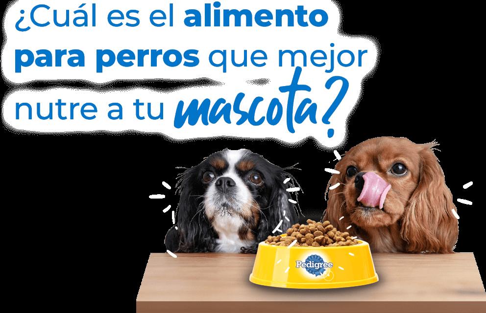 ¿Cuál es el alimento para perros que mejor nutre a tu mascota?