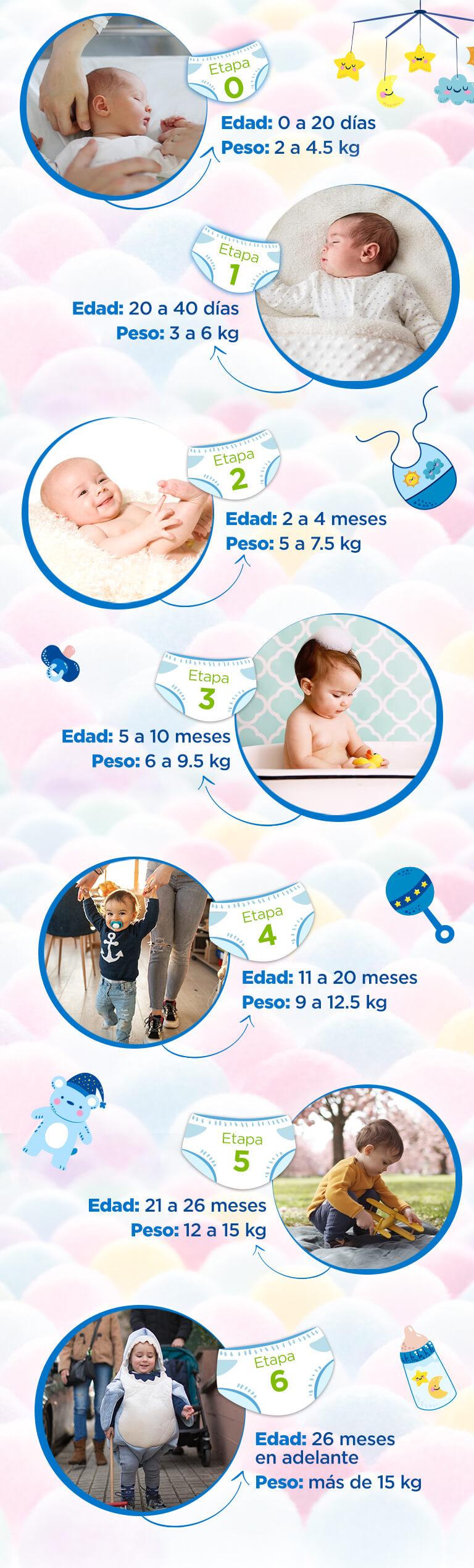 Etapa: 0  Edad: 0 a 20 días Peso: 2 a 4.5 kg  Etapa: 1 Edad: 20 a 40 días Peso: 3 a 6 kg  Etapa: 2 Edad: 2 a 4 meses Peso: 5 a 7.5 kg  Etapa: 3 Edad: 5 a 10 meses Peso: 6 a 9.5 kg  Etapa: 4 Edad: 11 a 20 meses Peso: 9 a 12.5 kg  Etapa: 5 Edad: 21 a 26 meses Peso: 12 a 15 kg  Etapa: 6 Edad: 26 meses en a