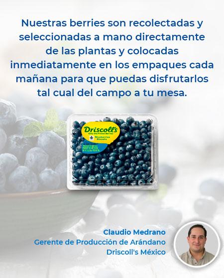 arandanos-driscolls