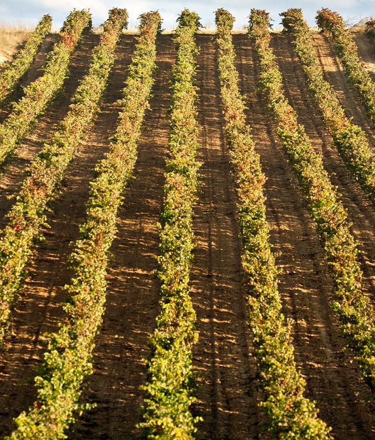 Viñedos Beronia, Localizada en La Rioja Alta, en España