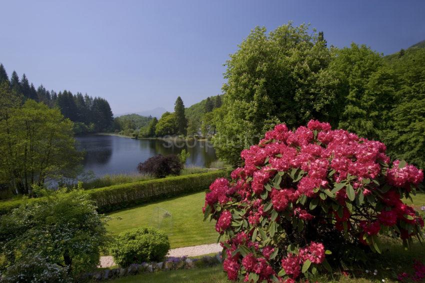 WY3Q9993 Early Summer Loch Ard Trossachs