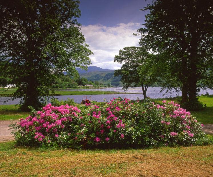 Springtime Scene From The Shore Of Loch Sunart Strontium West Highlands