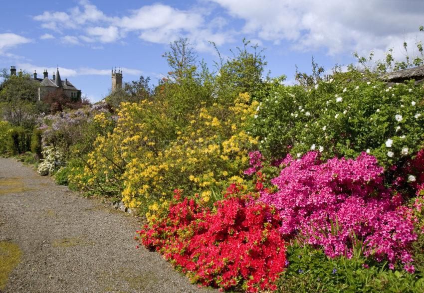 Ardmaddy Gardens Argyll