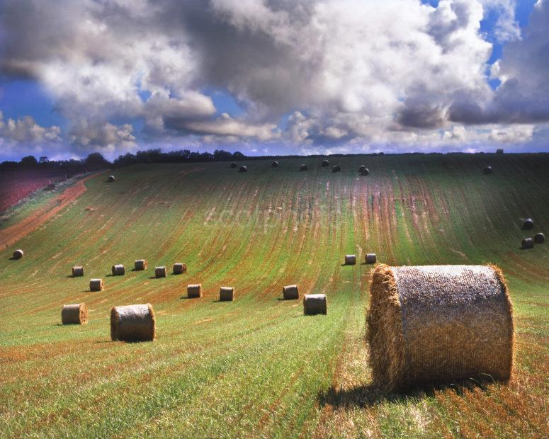 Rolly Polly Fields Rolls Of Hay In Scottish Borders