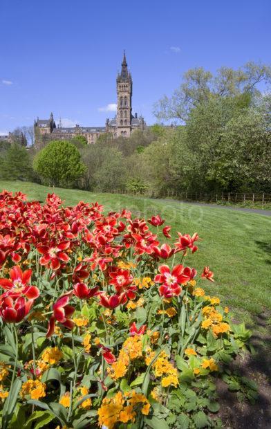 Springtime Kelvingrove Park With University Tower