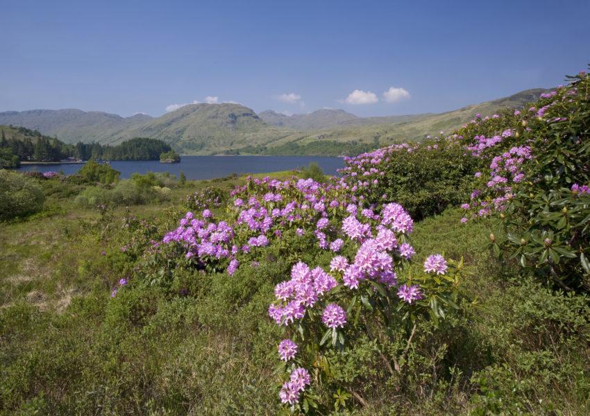 WY3Q0007 Trossachs Insprintime Loch Katrine