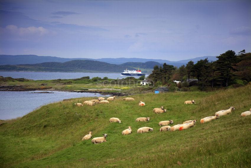 MV Finlaggan Exits West Loch Tarbert