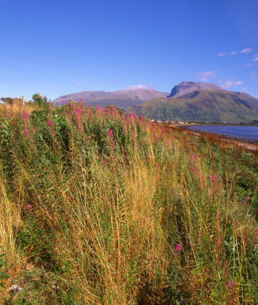 View Towards Ben Nevis And Fort William As Seen From The Shore Of Loch Eil Lochaber