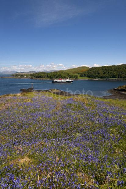 MV Isle Of Mull Passes Dunollie Castle From Kerrera