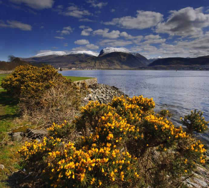 Towards Ben Nevis From Corpach With Gorse